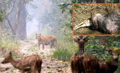 bardia national park jungle safari
