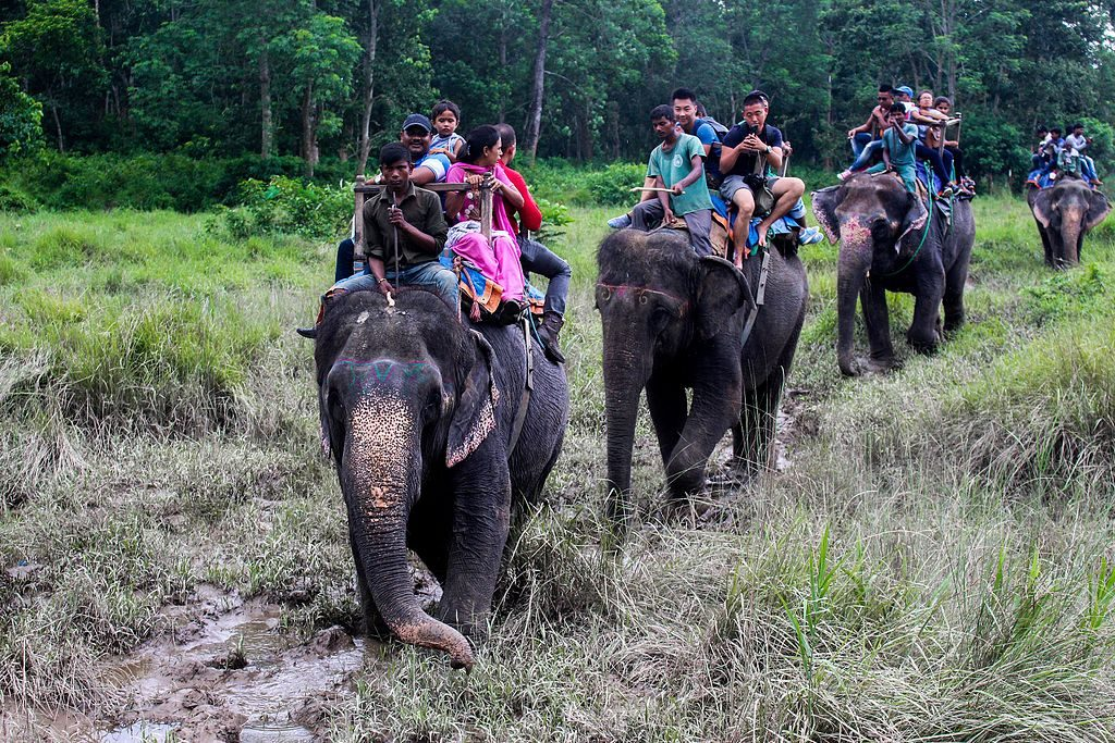 Chitwan Jungle Safari Tour (4)