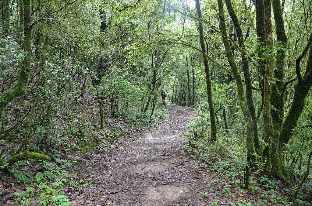Shivapuri Nagarjun National Park Hiking (2)